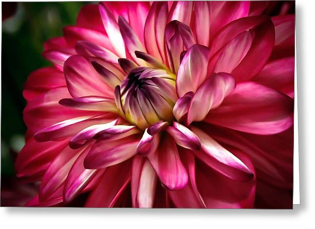 Dahlia Unfolding Greeting Card