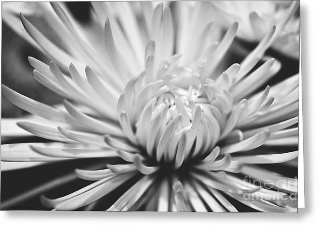 Unfolding Greeting Card by Artist and Photographer Laura Wrede