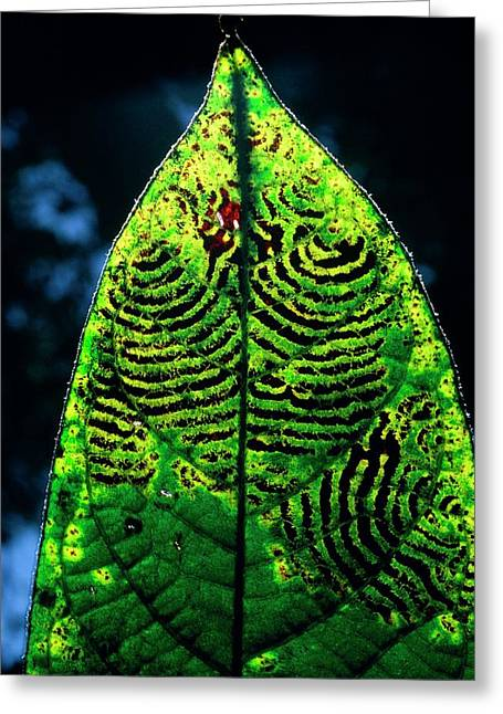Unidentified Fungus On Rain Forest Leaf Greeting Card by Dr Morley Read/science Photo Library