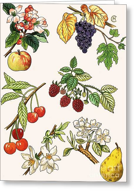 Unidentified Montage Of Fruit Greeting Card by English School