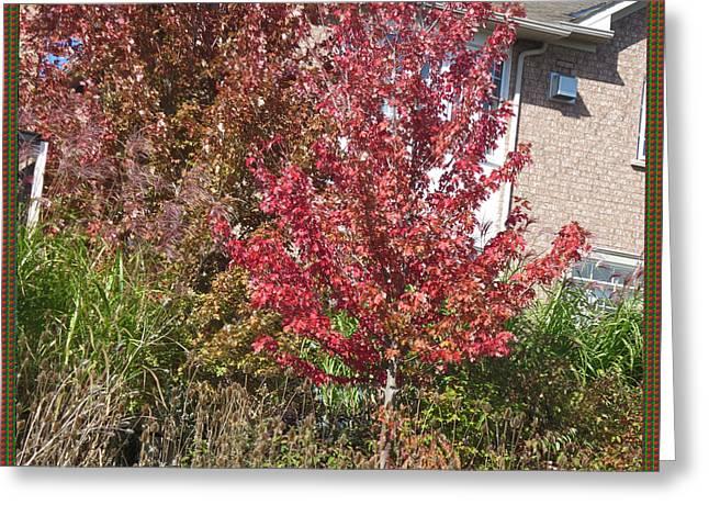 Unique Fall Season Color Garden Park Neighbourhood In Oakville Ontario Canada   Greeting Card