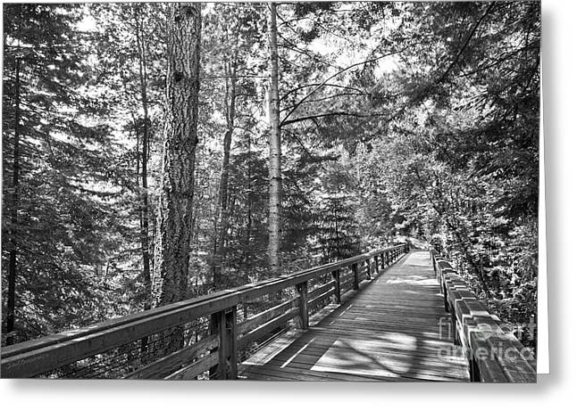 University Of California Santa Cruz Walkway Greeting Card by University Icons