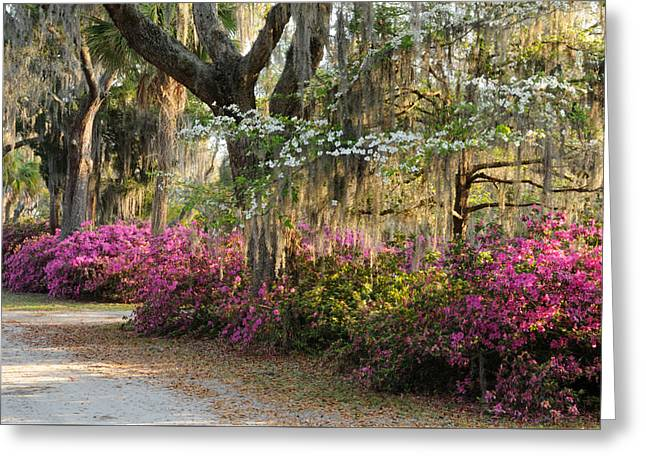 Greeting Card featuring the photograph Unpaved Road In Spring by Bradford Martin