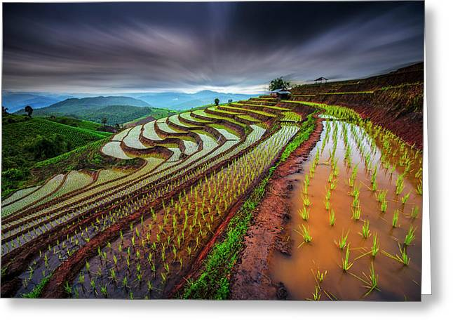 Unseen Rice Field Greeting Card