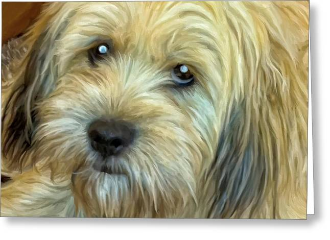 Chewy Greeting Card by Michael Pickett