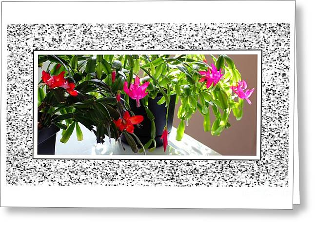 Unusual Simultaneous Bloomers 2 Greeting Card by Barbara Griffin