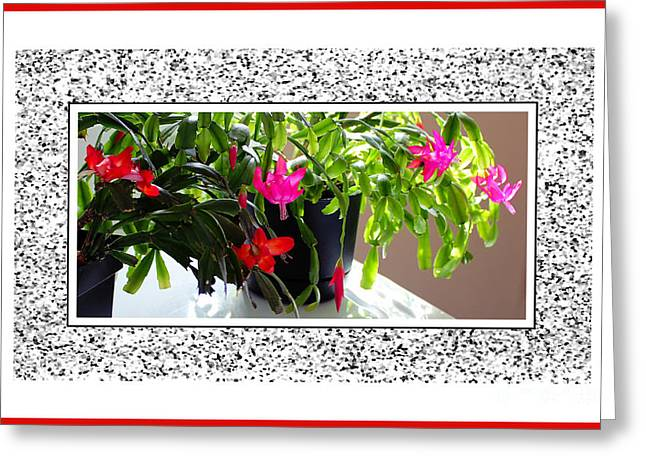 Unusual Simultaneous Bloomers Greeting Card by Barbara Griffin