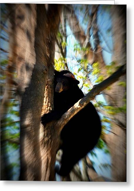 Up A Tree Greeting Card by Valarie Davis