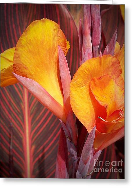 Up Close And Personal Greeting Card by Chalet Roome-Rigdon