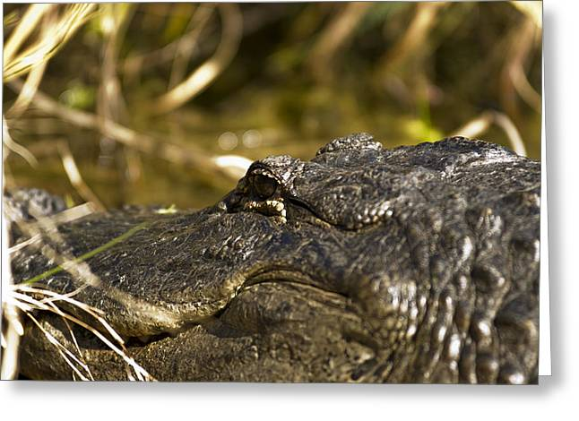Up Close And Personal Greeting Card by Frank Feliciano