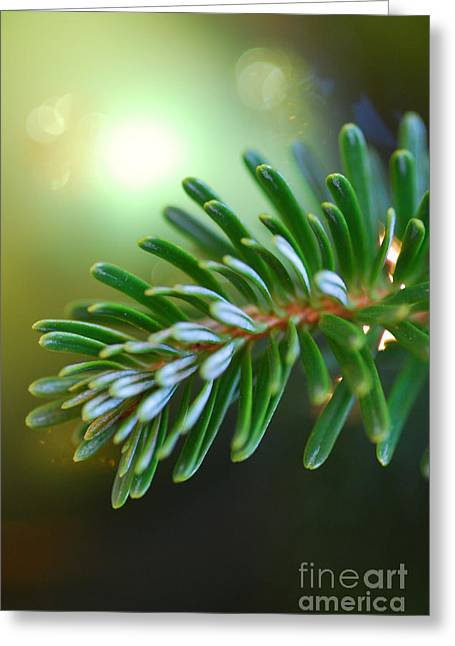 Up Close Evergreen Branch Greeting Card