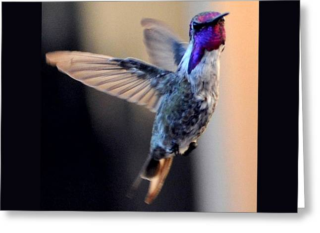 Greeting Card featuring the photograph Up Up And Away Male Hummingbird by Jay Milo
