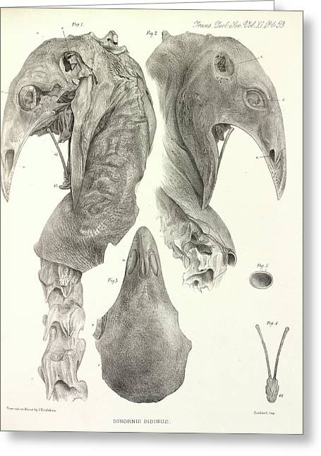 Upland Moa Greeting Card by Natural History Museum, London