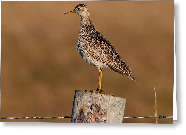 Greeting Card featuring the photograph Upland Sandpiper by Larry Trupp