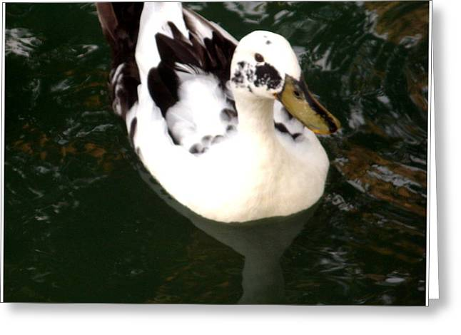 Upon Reflection Greeting Card by Misty Herrick