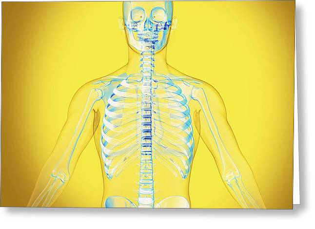 Upper Body Greeting Card by Claus Lunau/science Photo Library