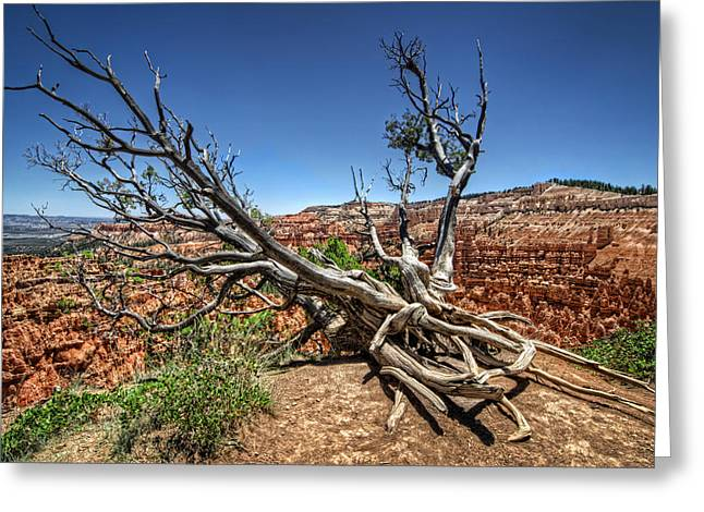 Uprooted - Bryce Canyon Greeting Card by Tammy Wetzel