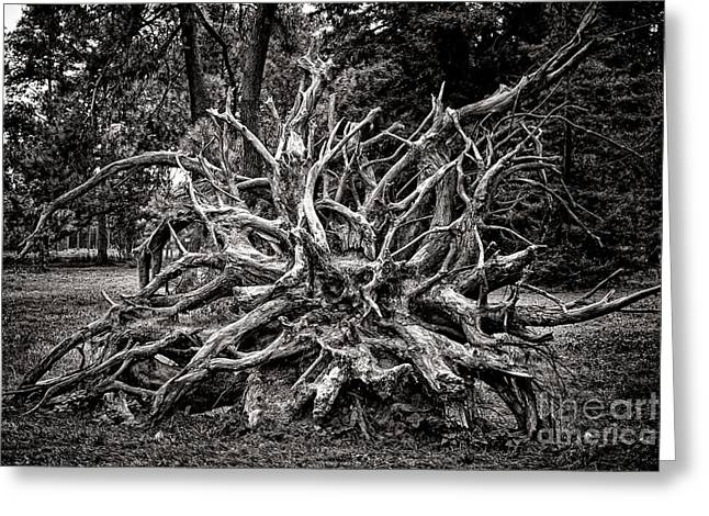 Uprooted Greeting Card by Olivier Le Queinec