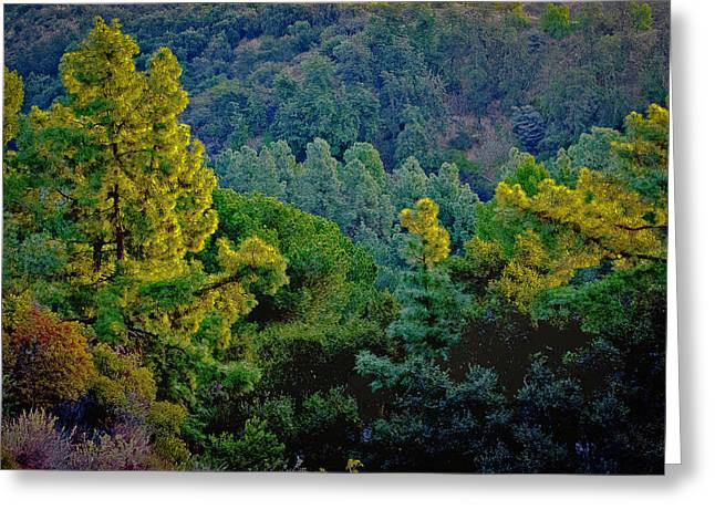 Greeting Card featuring the photograph Urban Forrest by Joseph Hollingsworth