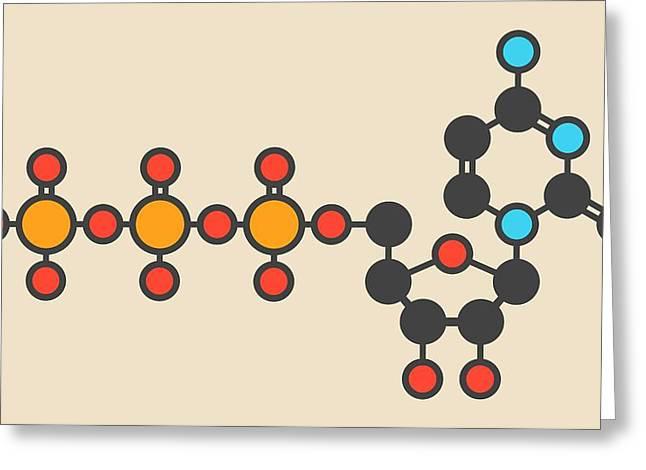 Uridine Triphosphate Molecule Greeting Card by Molekuul