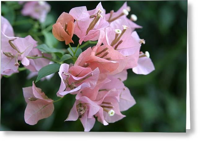 Us Botanic Garden - 121215 Greeting Card by DC Photographer