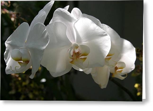 Us Botanic Garden - 121234 Greeting Card