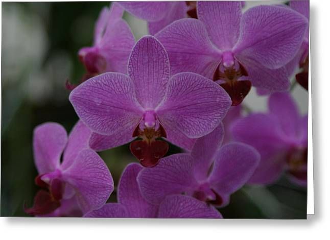 Us Botanic Garden - 121247 Greeting Card by DC Photographer