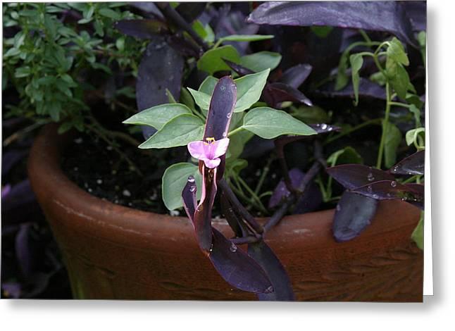 Us Botanic Garden - 121252 Greeting Card