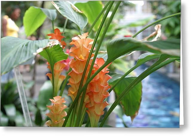 Us Botanic Garden - 12128 Greeting Card