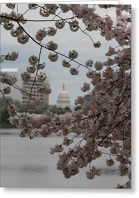 Us Capitol - Cherry Blossoms - Washington Dc - 01134 Greeting Card