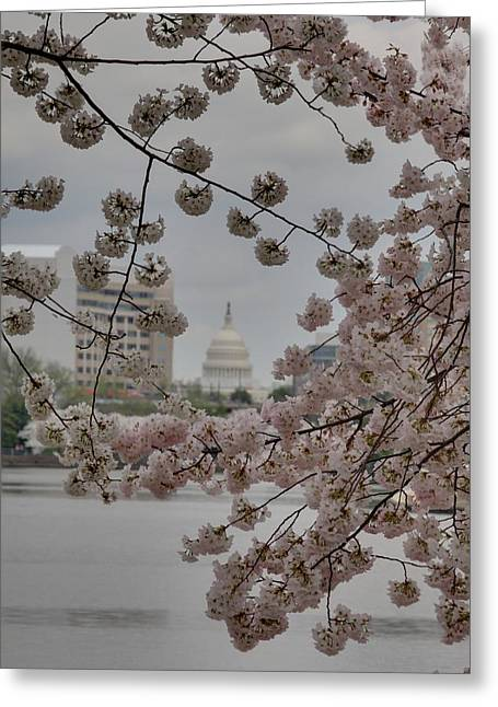 Us Capitol - Cherry Blossoms - Washington Dc - 01137 Greeting Card by DC Photographer