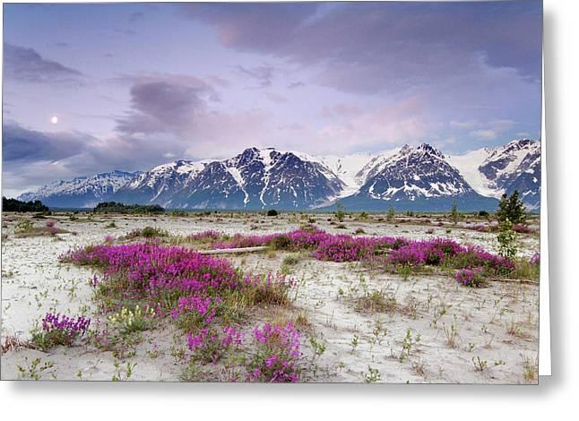 Usa, Alaska, Alsek River Valley Greeting Card by Jaynes Gallery