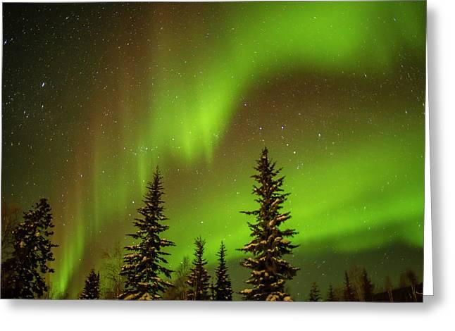 Usa, Alaska Aurora Borealis Over Spruce Greeting Card