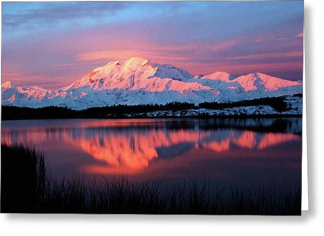 Usa, Alaska, Denali National Park Greeting Card