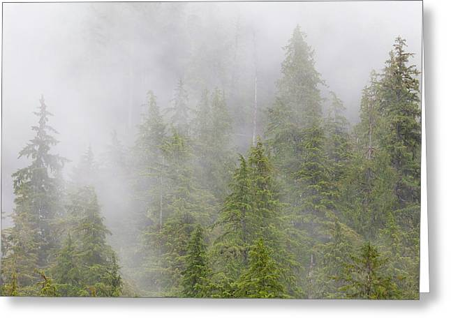 Usa, Alaska Fog In Spruce And Hemlock Greeting Card