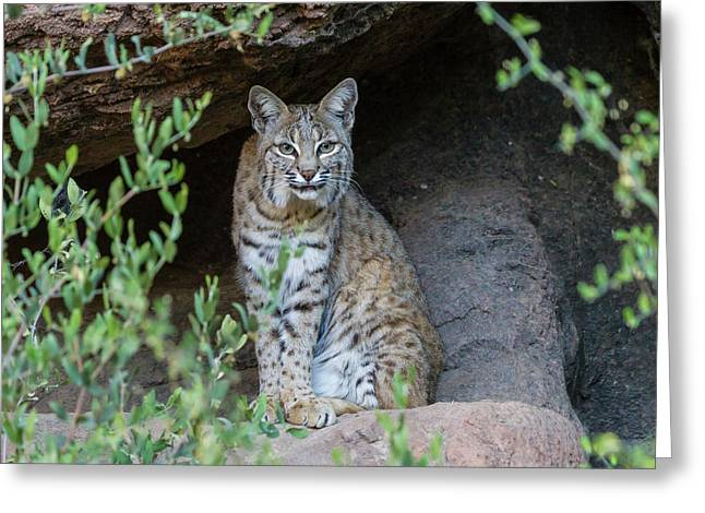 Usa, Arizona-sonora Desert Museum Greeting Card by Jaynes Gallery