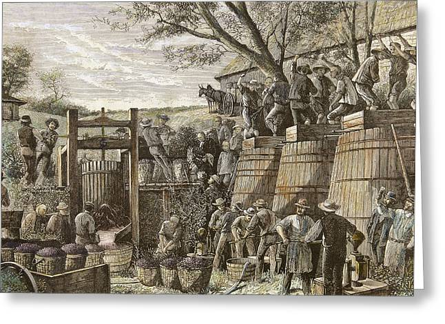 Usa. California. 19th Century. Chinese Workers Treading Grapes. Engraving Greeting Card by Bridgeman Images