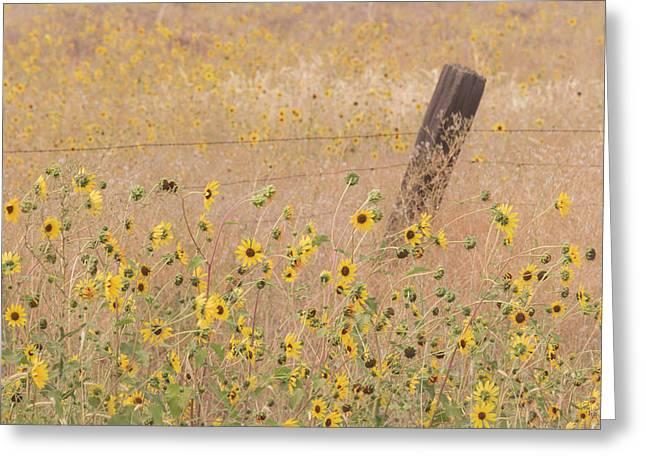 Usa, California, Adin Greeting Card by Jaynes Gallery