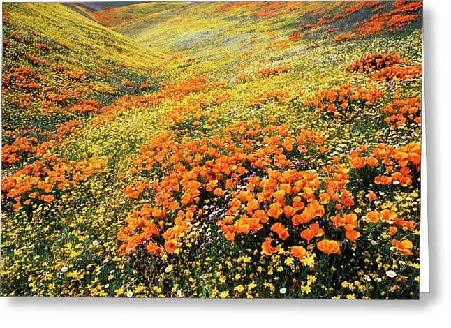 Usa, California, Antelope Valley, View Greeting Card by Stuart Westmorland