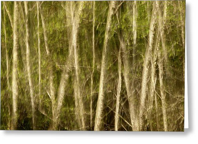 Usa, California, Big Sur, Abstract Greeting Card