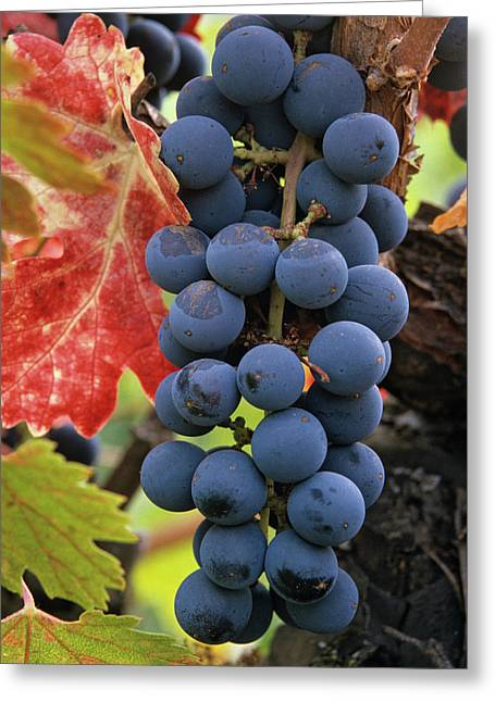 Usa, California Detail Of Cabernet Greeting Card