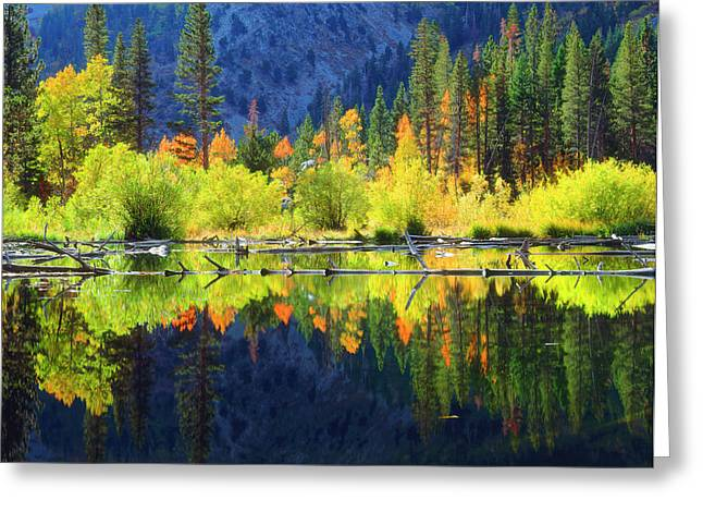 Usa, California, Fall Colors Reflecting Greeting Card by Jaynes Gallery