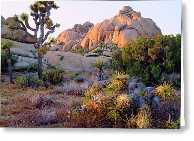 Usa, California, Joshua Tree National Greeting Card