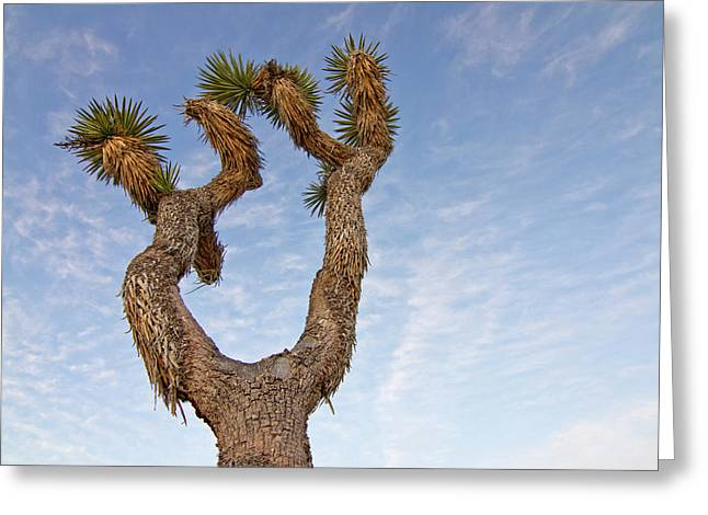 Usa, California, Joshua Tree National Greeting Card by Luc Novovitch