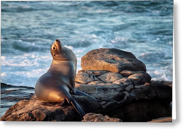 Usa, California, La Jolla, Sea Lion Greeting Card