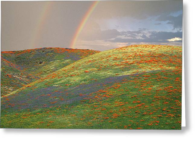 Usa, California, Near Gorman Greeting Card by Jaynes Gallery