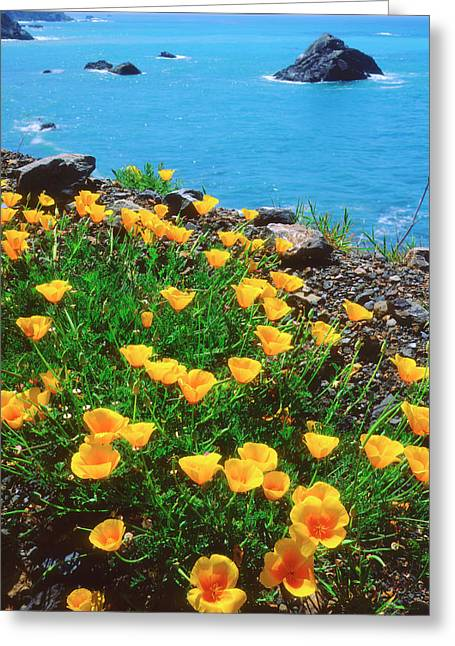 Usa, California, Poppies Greeting Card by Jaynes Gallery