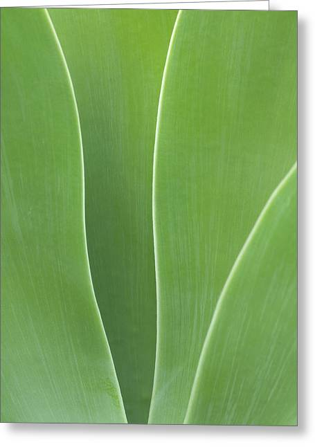 Usa, California, San Diego, Agave Greeting Card by Ann Collins
