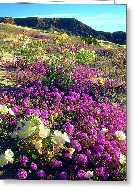 Usa, California, Sand Verbena And Dune Greeting Card by Jaynes Gallery