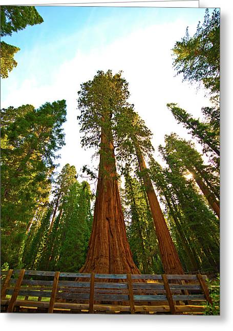 Usa, California, Sequoia, Kings Canyon Greeting Card
